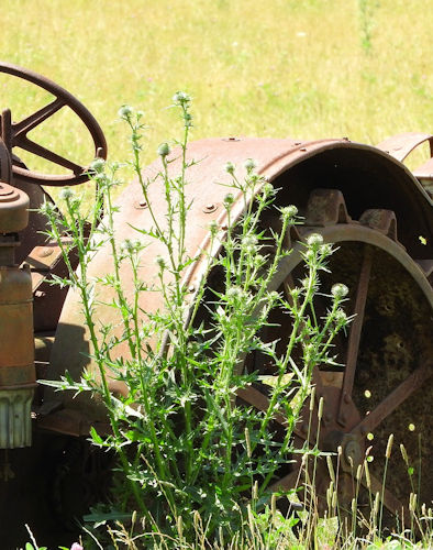An old abandoned tractor.