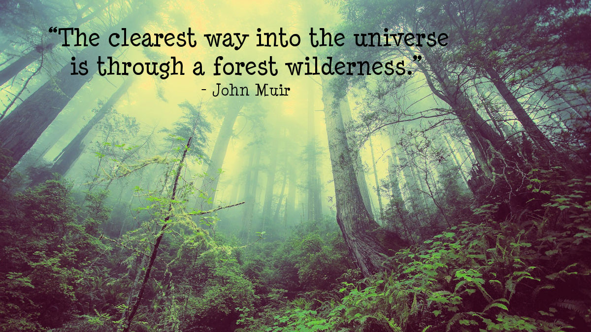 """The clearest way into the universe is through a forest wilderness."" - John Muir"